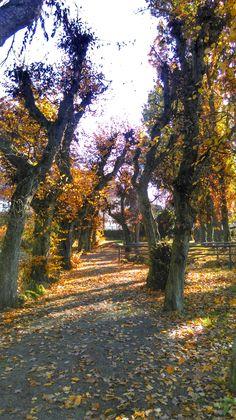 Allee im Schlosspark Laupheim