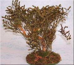 Tipico arbusto de secano