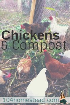 Like peas and carrots, chickens and gardens belong together (though not occupying the same space). Chickens want to work. Why not harness that natural instinct?::