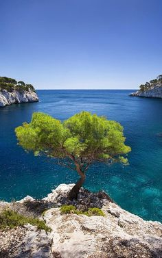 Lone Pine tree near Cassis, Provence, France
