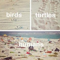 Save the beaches. Save the oceans. Save the planet.Shaking my head at the image's.