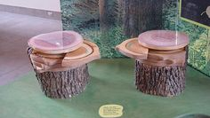 Different types of wood at A Forest Journey traveling exhibit at the Franklin Institute.