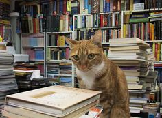 Cats at a book store 2 書店貓 by Alan HL, via Flickr