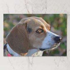 Sunset Beagle Paper Pad - dog puppy dogs doggy pup hound love pet best friend