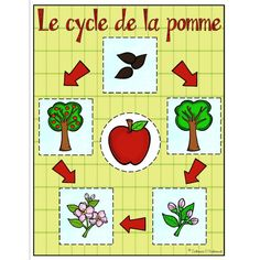 Pommes : Le cycle de la pomme Plus Seasons Activities, Apple Activities, Autumn Activities, Preschool Activities, Kindergarten Crafts, Kindergarten Classroom, Science For Kids, Science And Technology, Co Teaching