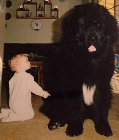 big furry dogs - Google Search
