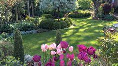 Open Garden Cheshire 2017 - Tulips and Silver Pear in Dappled Sunlight - Caroline Benedict Smith Garden Design Cheshire