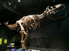 Carnivora is a forum for all those interested in everything to do with animals. Jurassic World T Rex, Prehistoric Animals, Tyrannosaurus, Fossils, Dinosaurs, Lion Sculpture, Nature, Art, Naturaleza