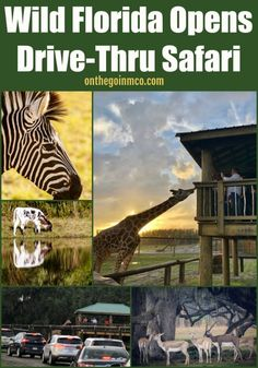 Wild Florida has focused on educating individuals on Central Florida's natural resources, and now they have opened a Drive-Thru Safari Park experience.
