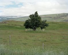 Frédérick Carnet à la recherche des arbres islandais