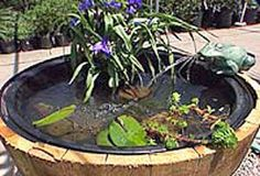 Whiskey Barrel Water Garden gotta make this one if you like water gardens