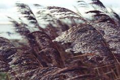 Tyypillisiä Vatan vuodenaikoja ovat syksy ja talvi. Vata koostuu eetteri-ja ilmaelementeistäja on luonteeltaan kuiva,kylmä ja tuulinen.