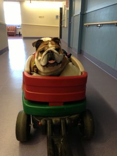 They see me rollin'. I love this one! This dog looks like Dobie. :)