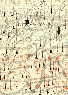 Nerve cells  Sulla fina anatomia degli organi centrali del sistema nervoso, (Regia-Emilia, 1885)   Author: GOLGI, Camillo (1843-1926)  Artist: N/A