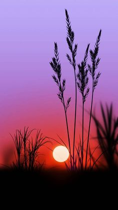 purple sunset wallpaper by floradam - 82af - Free on ZEDGE™