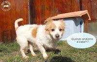Ohana Dog_Blog: Canina taglia piccola in adozione