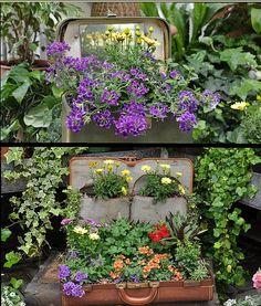 Suitcases - flower pots