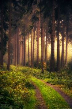 ♥ Mystic forest in Vogtland Saxony Germany