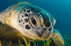 Big Turtle Closeup Face HD Images