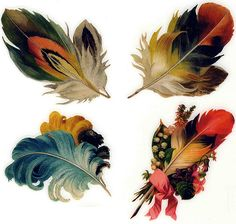 Feathers  /  DON'T THEY REMIND YOU OF ROSEMAL ... 'FEATHERS'... MORE THAN FLOWERS -- IN MANY CASES? HMMM ... HUNDREDS OF YEARS OLD. IT'S POSSIBLE BIRD FEATHERS ARE PART OF IT. __ HEIDI BERG