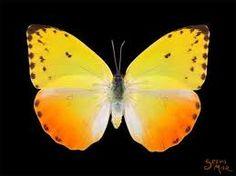 mariposas costa rica - Buscar con Google