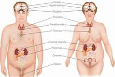 Herbal Remedies For Hormonal Imbalance