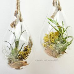 Rope terrarium // air plant  lichen terrarium // by PinkSerissa