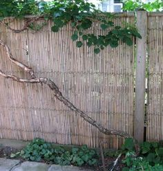 Lovely Backyard X Scapes Rolled Bamboo Fencing