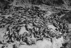 The Korean War (1950-53) had its own atrocities, largely unknown to the general public. This is the macabre sight of a killing ground where communist troops slaughtered South Korean POWs and peasants and left them to rot.