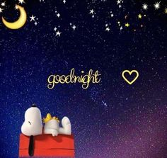 Good Night Sleep Well, Good Night Funny, Good Night I Love You, Good Night Moon, Good Night Image, Good Morning Good Night, Good Night Greetings, Good Night Messages, Good Night Quotes