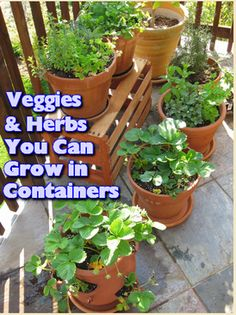 Herbs to grow in containers