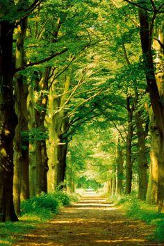 オールポスターズの ハイン・ファン・デン・ヘーヴェル「森の小道」ポスター