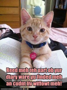 KITTY CAT!!!!!!