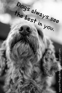 ❤ Dogs ❤