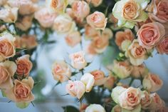 Pretty pale pink roses