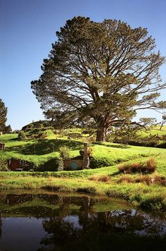 The Millpond and Party Tree at Hobbiton
