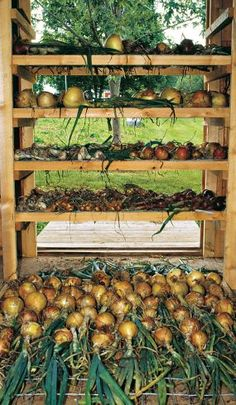How to Grow Onions from Seed - Vegetable Gardener