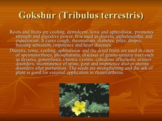 Gokshur (Tribulus terrestris) <ul><li>Roots and fruits are cooling, demulcent, tonic and aphrodisiac, promotes strength an...