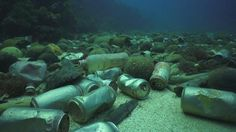 diving anyone? You can admire all kinds of waste ... Bottles, tires, cans, plastic in all its forms. Many would like to see it in endangered species of extinction!
