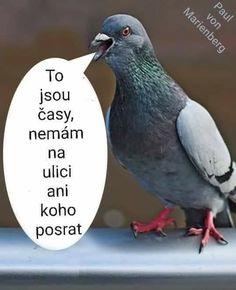 To jsou časy, nemám na ulici ani koho posrat! Life Humor, Man Humor, Memes Humor, Wtf Funny, Funny Texts, Polish Memes, Happy Birthday Video, Weekend Humor, Animal Jokes
