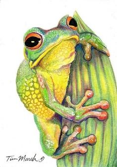 Tree Frog by Tim Marsh Colored Pencil ~ 3.5 x 2.5