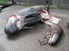 """Can you believe this cruelty happens at the Faroe Islands?!  It's called """"The Grind"""" #EndTheGrind"""
