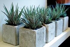 concrete planters with - Nick what is this??