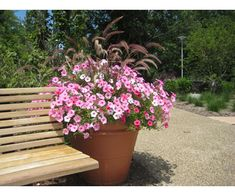 10 Great Landscape Plants - Supertunia® Vista Bubblegum | Proven Winners
