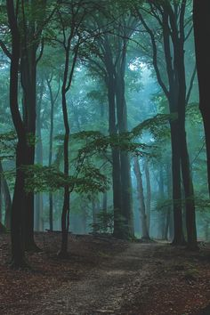 ♥Into the Forest