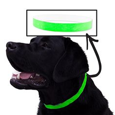 SafeT Collar 500 Ct ID Veterinary Bands For Animals  Neon Green ** You can get additional details at the image link.