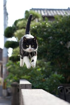 50 Amazing Photos From Cat Heaven Island In