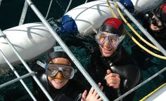 #Sharkdive with Shark on this tour we collect you from hotel in #Capetown