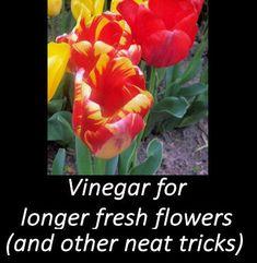 Vinegar Tips - Long Lasting Cut Flowers & More -