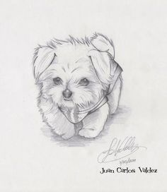 Easy animals to sketch puppy sketches drawing dog illustration animal drawings easy cute learn how to . easy animals to sketch Easy Animal Drawings, Pencil Art Drawings, Animal Sketches, Art Drawings Sketches, Easy Drawings, Art Sketches, Drawing Animals, Sketches Of Dogs, Painted Horses